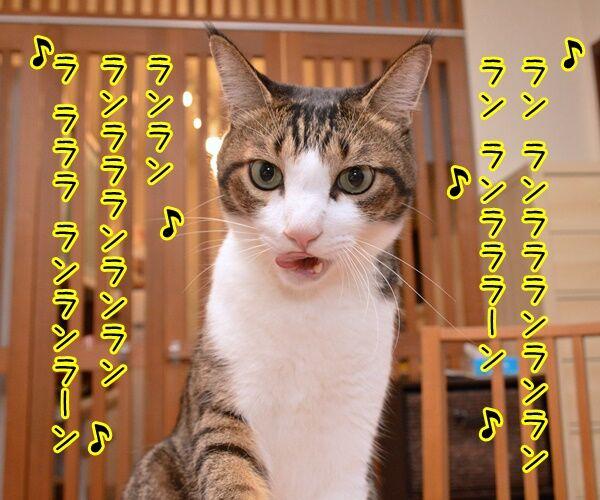 ナウシカ・レクイエム 猫の写真で4コマ漫画 2コマ目ッ