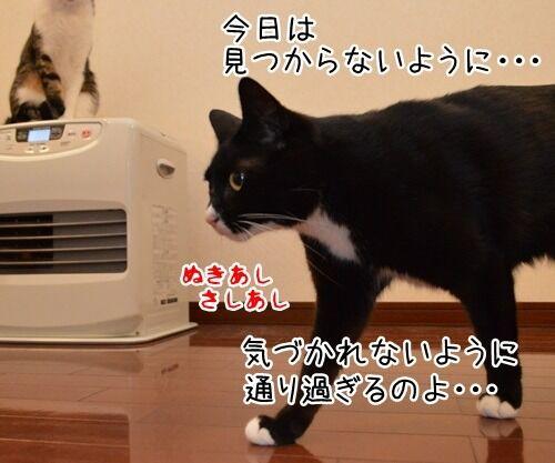 めんどうなのよッ 猫の写真で4コマ漫画 3コマ目ッ