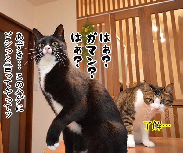 どうおとしまえつけるつもり? 猫の写真で4コマ漫画 2コマ目ッ