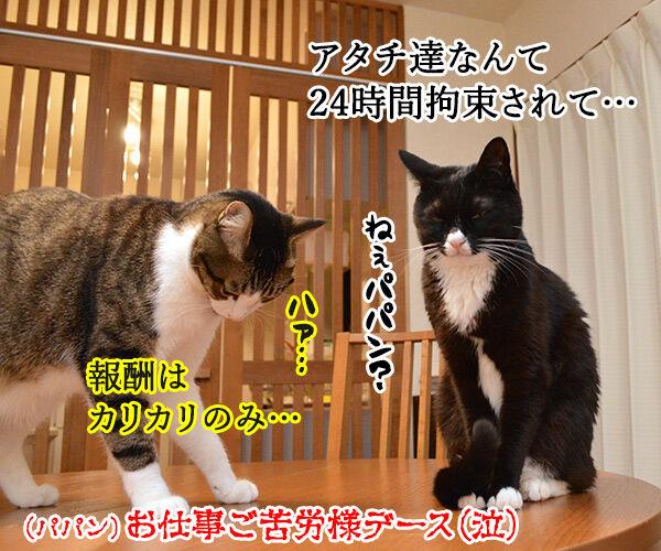 文科省の天下りは『月2回勤務』で『年収1千万円』なのッ 猫の写真で4コマ漫画 4コマ目ッ