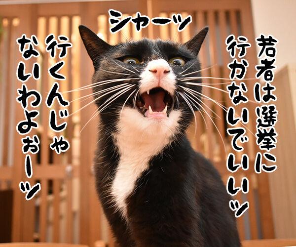 『若者よ、選挙に行くな』って動画があるんですってッ 猫の写真で4コマ漫画 1コマ目ッ