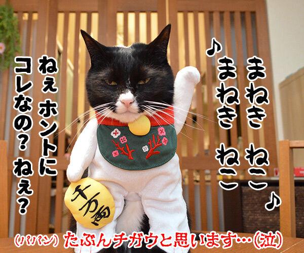『あたし、ねこ』が変わるってホント? 猫の写真で4コマ漫画 4コマ目ッ