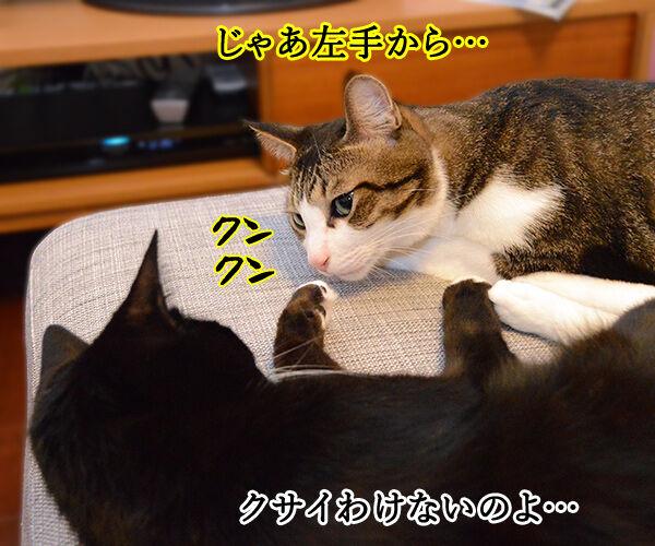 疑惑 其の二 猫の写真で4コマ漫画 2コマ目ッ