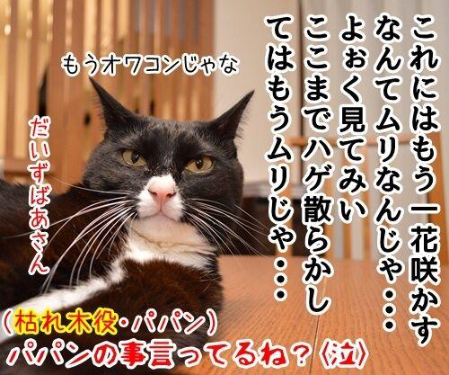 にほん昔話「花さかじいさん」 猫の写真で4コマ漫画 4コマ目ッ