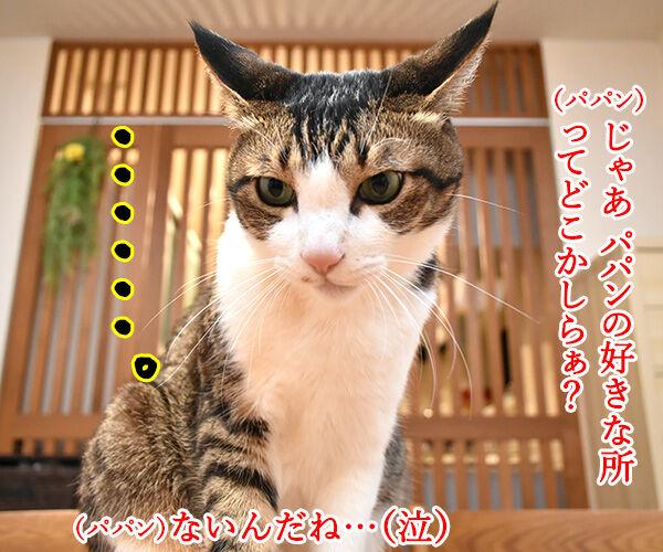 好きな所はあるかしら? 猫の写真で4コマ漫画 2コマ目ッ