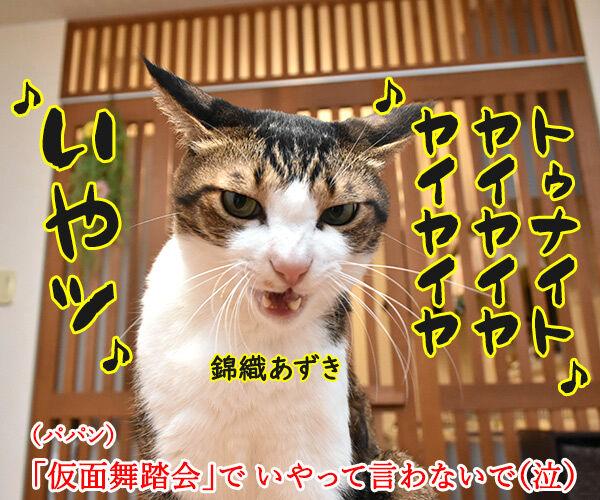 オヤツは今夜じゃイヤなのよッ 猫の写真で4コマ漫画 3コマ目ッ