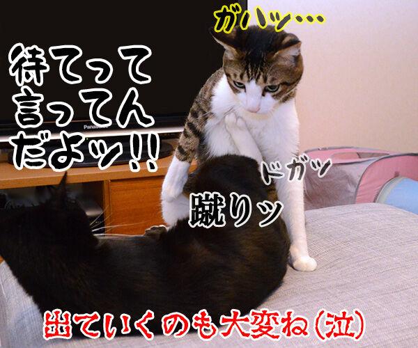 ぐうたら主婦 猫の写真で4コマ漫画 4コマ目ッ