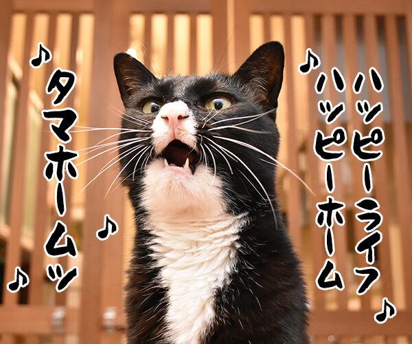 タマホームで建替えしましょうよッ 猫の写真で4コマ漫画 1コマ目ッ