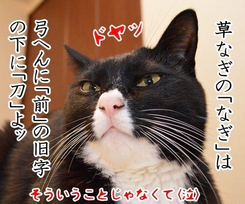 スマスマ緊急生放送を見て…… 猫の写真で4コマ漫画 4コマ目ッ