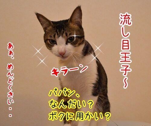 あずきさんを呼ぶとき 猫の写真で4コマ漫画 4コマ目ッ