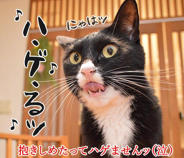 愛しくてハグしたいのよッ 猫の写真で4コマ漫画 4コマ目ッ