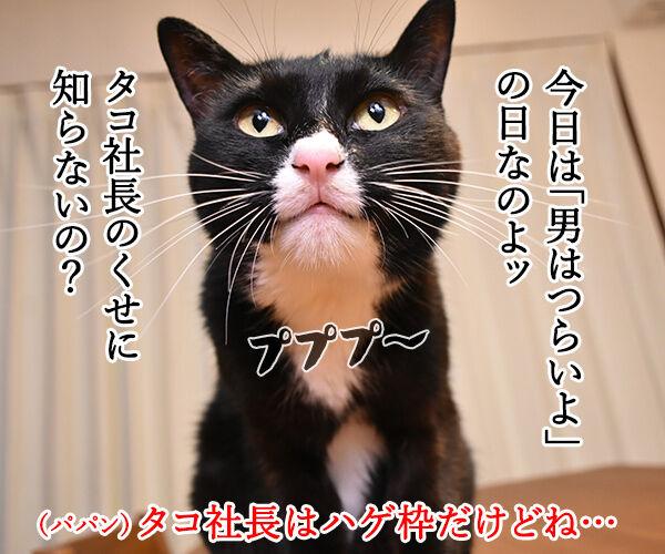 きょうは『男はつらいよ』の日なんですってッ 猫の写真で4コマ漫画 2コマ目ッ