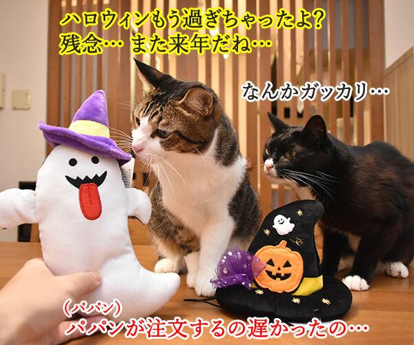 PECOBOXを初めて購入してみたのッ 猫の写真で4コマ漫画 4コマ目ッ
