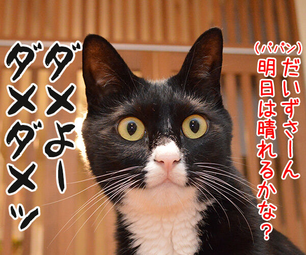 ダメよー ダメダメッ 猫の写真で4コマ漫画 2コマ目ッ