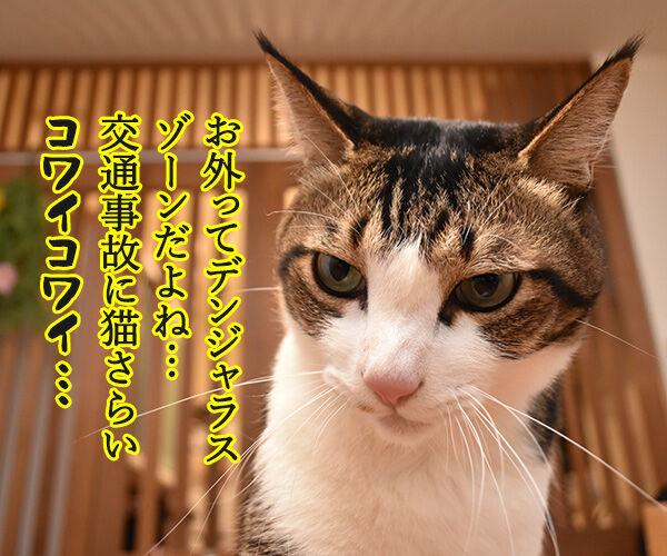 お外ってデンジャラスゾーンだよねッ 猫の写真で4コマ漫画 1コマ目ッ