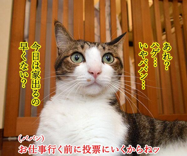 7月5日は投票に行くわよッ 猫の写真で4コマ漫画 1コマ目ッ