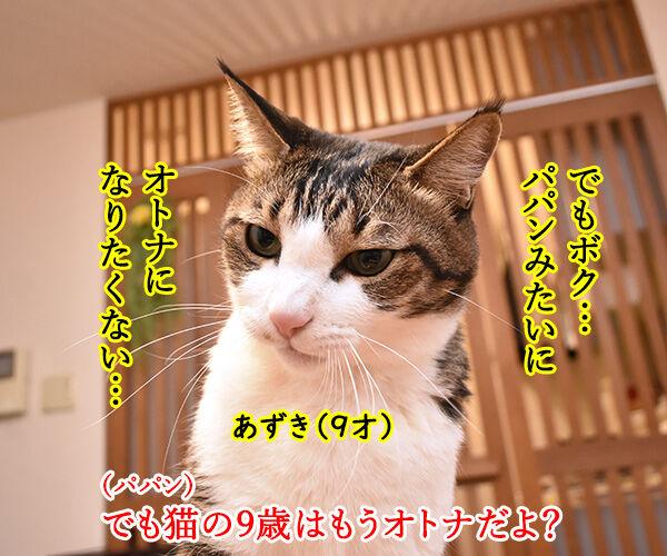 パパンみたいなオトナにはなりたくないの… 猫の写真で4コマ漫画 2コマ目ッ
