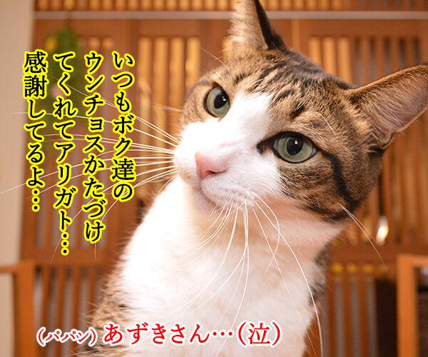 いつもウンチョス片付けてくれてアリガトー 猫の写真で4コマ漫画 2コマ目ッ