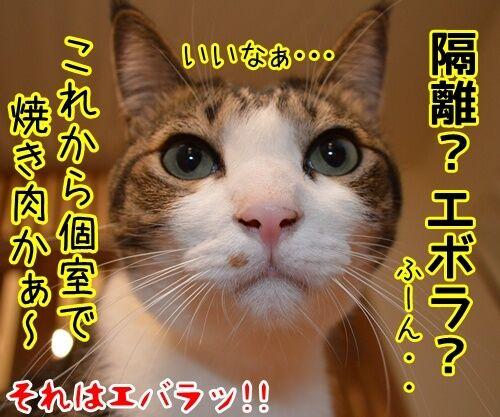 アタチ、じつは… 猫の写真で4コマ漫画 4コマ目ッ