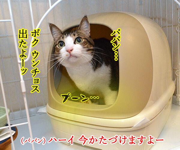 いつもウンチョス片付けてくれてアリガトー 猫の写真で4コマ漫画 1コマ目ッ