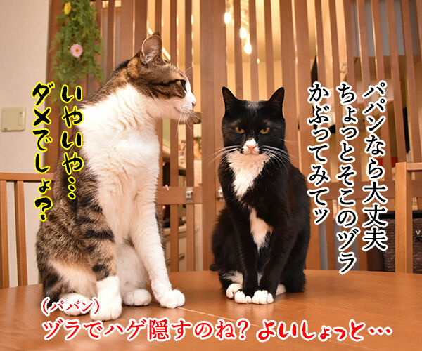 TERRACE HOUSE に出てみたいのよッ 猫の写真で4コマ漫画 3コマ目ッ