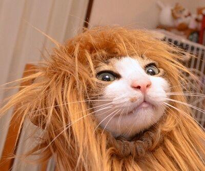 元気を出して(竹内まりや) 猫の写真で4コマ漫画 4コマ目ッ