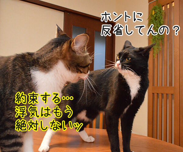 アンタってひとは 猫の写真で4コマ漫画 3コマ目ッ