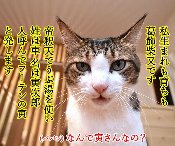 きょうは『男はつらいよ』の日なんですってッ 猫の写真で4コマ漫画 1コマ目ッ