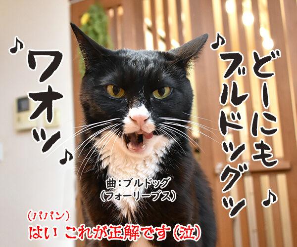 ニッチモサッチモ 猫の写真で4コマ漫画 4コマ目ッ