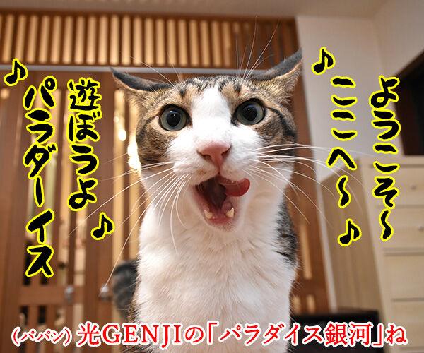 光GENJIのあの曲は? 猫の写真で4コマ漫画 1コマ目ッ