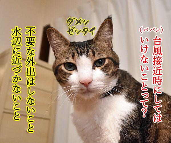 台風接近時にしてはいけないこと 猫の写真で4コマ漫画 1コマ目ッ