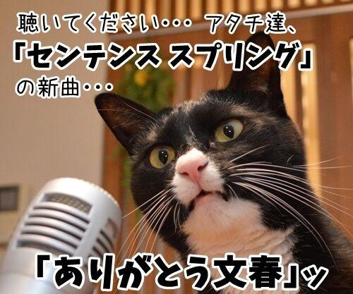 ライブハウス パパンちにようこそッ 猫の写真で4コマ漫画 3コマ目ッ