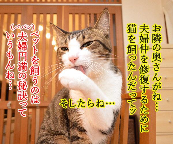 ペットを飼うのは夫婦円満の秘訣よね 猫の写真で4コマ漫画 1コマ目ッ