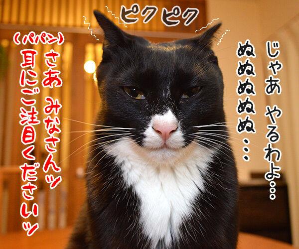 宴会芸 猫の写真で4コマ漫画 2コマ目ッ