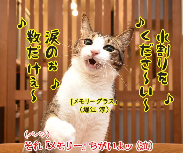 大ヒットミュージカル「キャッツ」が実写映画化なのよッ 猫の写真で4コマ漫画 4コマ目ッ