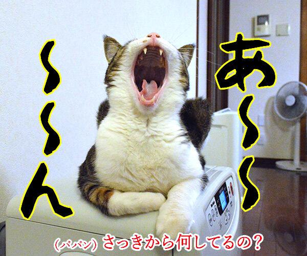 節分の日のエア〇〇 猫の写真で4コマ漫画 3コマ目ッ
