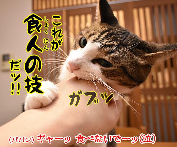 たわし作り一筋50年の職人が作る猫用たわしなのッ 猫の写真で4コマ漫画 4コマ目ッ