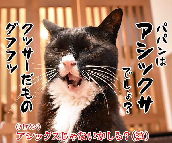 スニーカーを買い替えようと思うのッ 猫の写真で4コマ漫画 4コマ目ッ