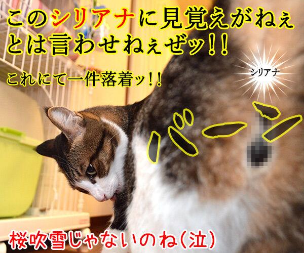 遠山のあずきさん 其の一 猫の写真で4コマ漫画 4コマ目ッ