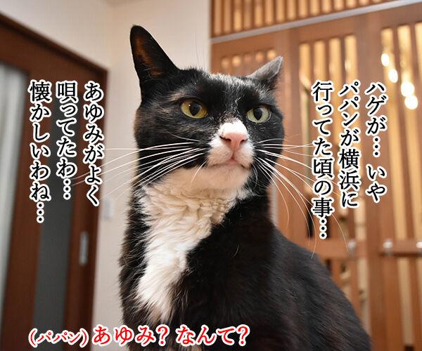 横浜の夜景ってキレイだよねッ 猫の写真で4コマ漫画 2コマ目ッ