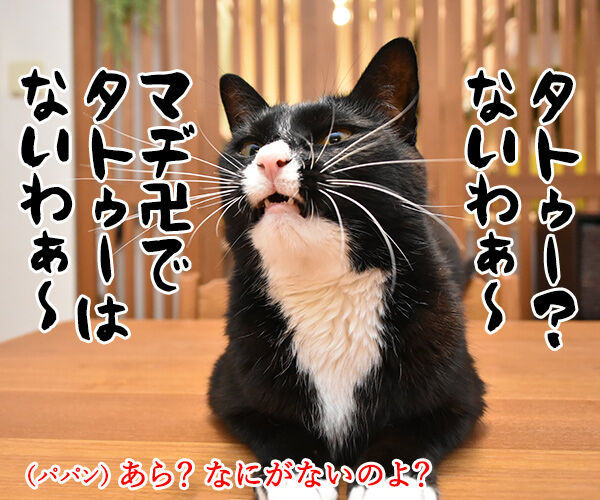 りゅうちぇるのタトゥーに賛否両論なのよッ 猫の写真で4コマ漫画 3コマ目ッ