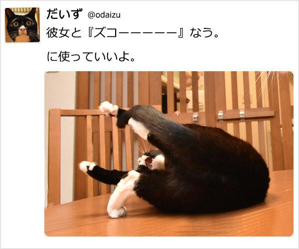 『~なう。に使っていいよ。』ってやってみたのッ 猫の写真で4コマ漫画 3コマ目ッ