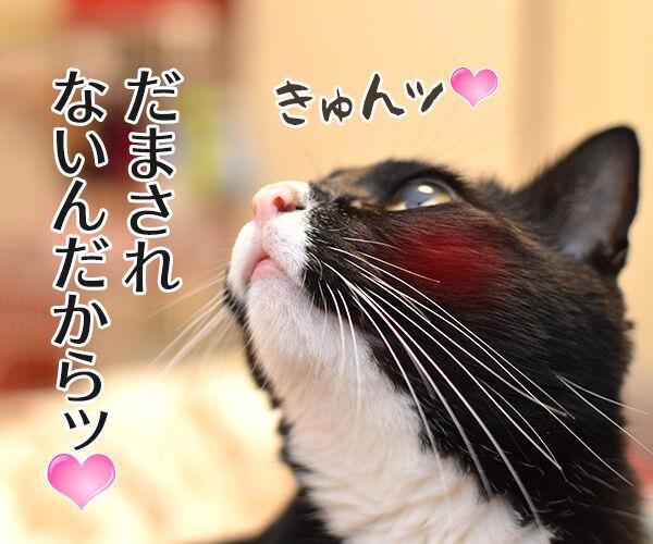あずき食堂にて 猫の写真で4コマ漫画 4コマ目ッ