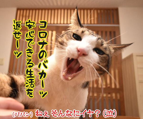 安心して生活できるように一日も早い終息を祈るわッ 猫の写真で4コマ漫画 4コマ目ッ