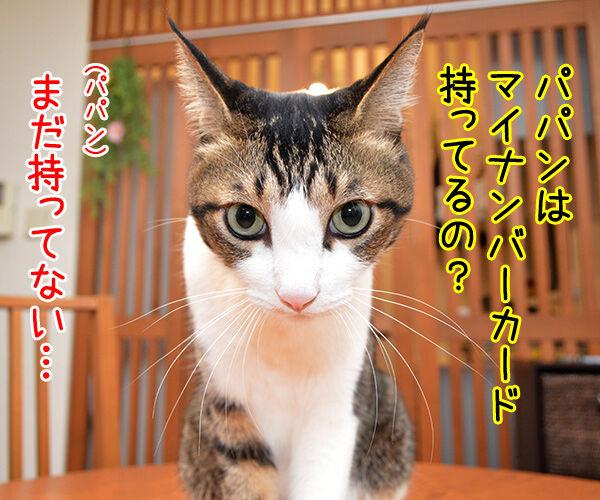 マイナンバーカード 持ってる? 猫の写真で4コマ漫画 1コマ目ッ