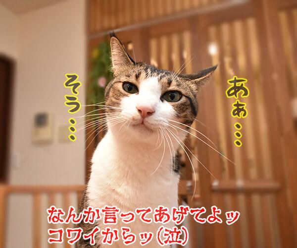 きょうは何の日? アタチの日ッ 猫の写真で4コマ漫画 4コマ目ッ