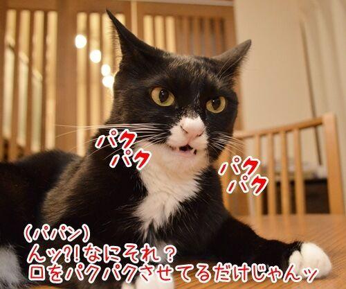 モノマネ当てクイズ 猫の写真で4コマ漫画 2コマ目ッ