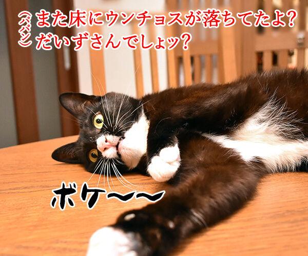 パパンのお説教 猫の写真で4コマ漫画 1コマ目ッ