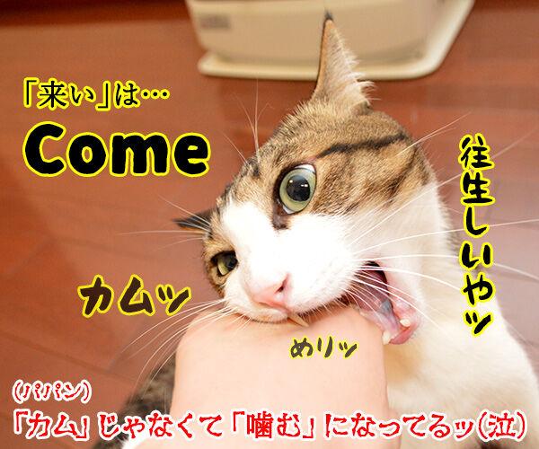 ドッグトレーナー 犬養あずきの英語でしつけるコマンド用語講座 猫の写真で4コマ漫画 4コマ目ッ