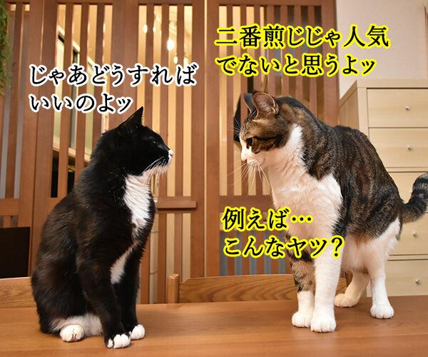 不機嫌な猫『グランピー・キャット』が亡くなったんですってッ 猫の写真で4コマ漫画 3コマ目ッ